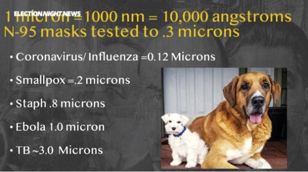 Virus sizes